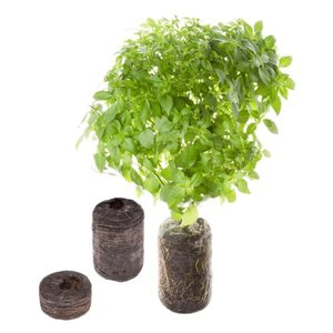 Tregren SEEDPOD03 growing kit/refill 2 pc(s) Basil