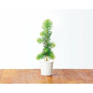SMART HOME SPRUCE REFILL/SPRUCE-REFILL-3 CLICK&GROW
